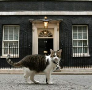 The Downing Street Cat